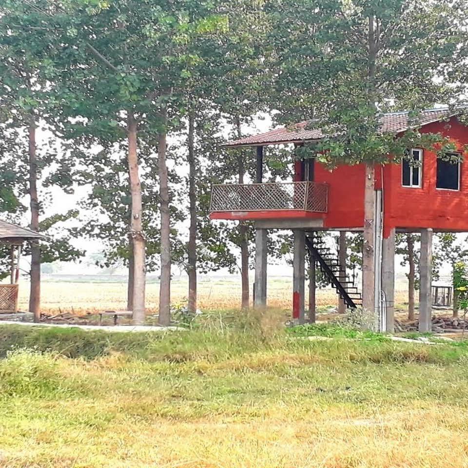 Chahal Tree Farm House Image