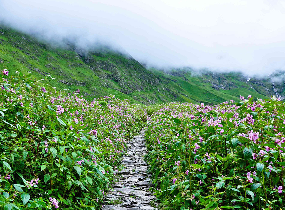 Valley of Flowers Trek Image